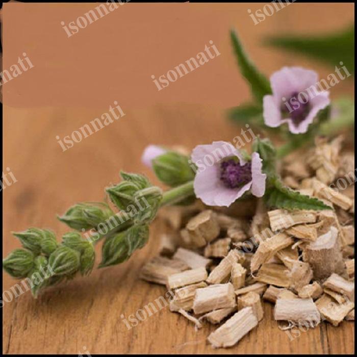 خرید ریشه گل ختمی از مراکز فروش اینترنتی با نازلترین قیمت
