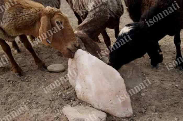 خواص سنگ نمک برای دام و روش مصرف آن