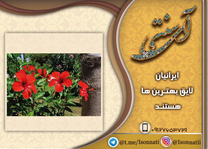 اطلاعات خرید و فروش گل ختمی چینی در ایران